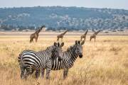 Safari Trifecta: Etosha, Akagera, and Okavango Delta