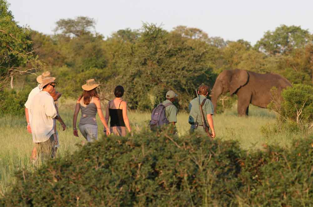 Walking Safaris in the Kruger National Park, Top 5 Walking Safaris in the Kruger National Park