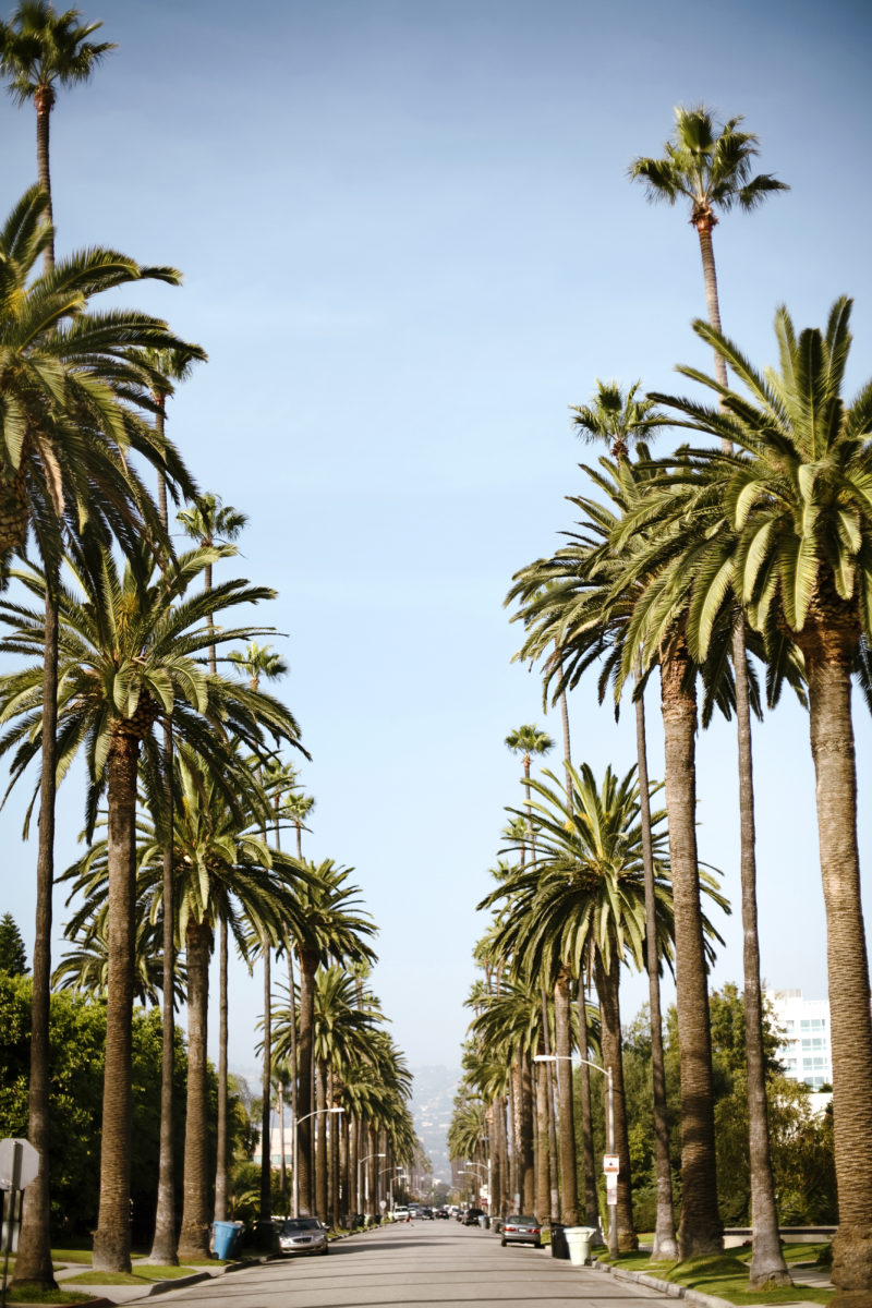 Best Palm Trees For Home Gardens Sunset Magazine