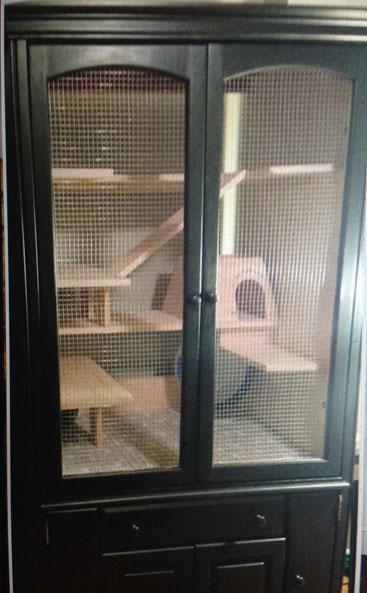 Chinchilla Housing Caging and husbandry