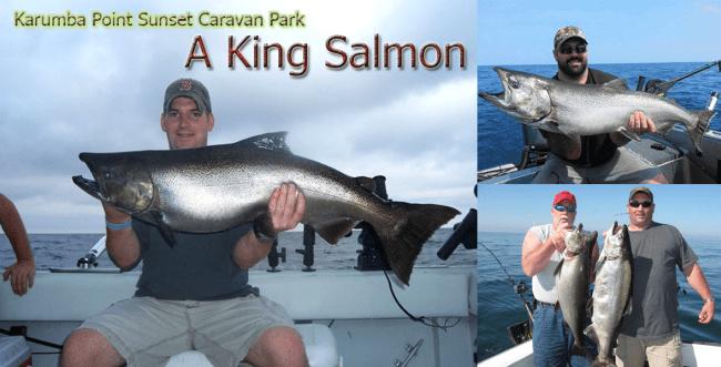 A-King-Salmon