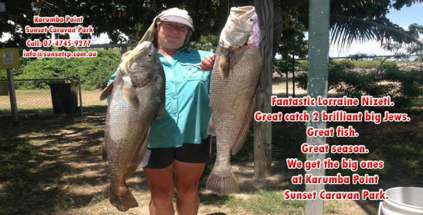 Great season. We get the big ones at Karumba Point Sunset Caravan Park.
