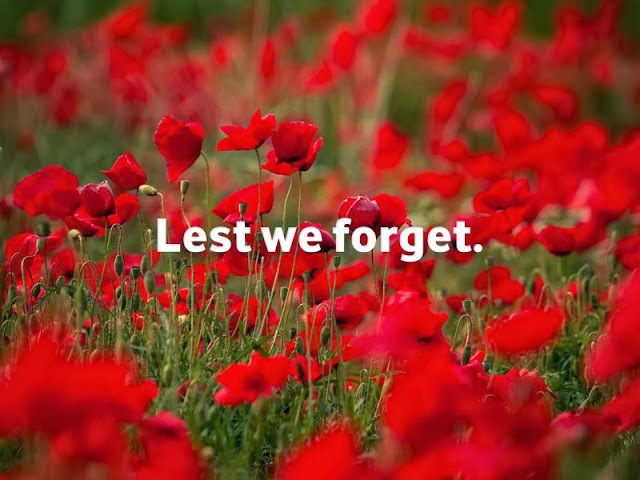 Anzac Day Poppies