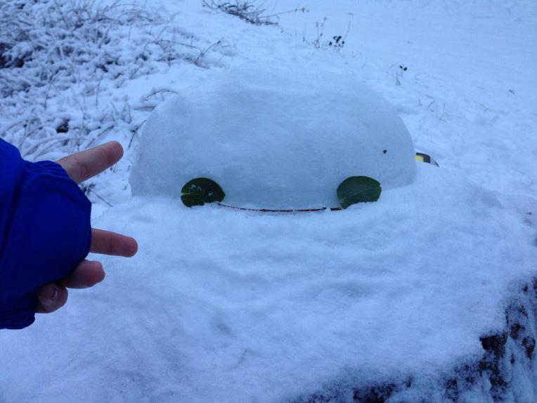 lily_snow3