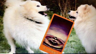 Tarot Time!: 14 Temperance