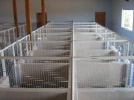 asilo cachorros pequenos