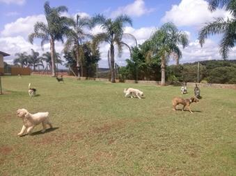 Campo separado para cães de pequeno porte