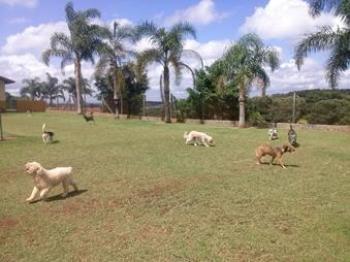 cães pequenos correndo abrigo cachorros