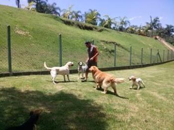 cachorros brincando no spa animal