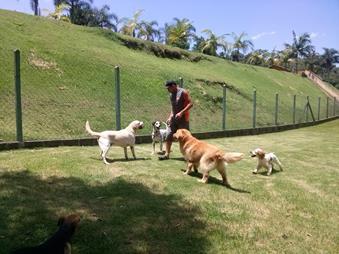 lar temporário para cães