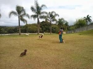 hotel-animais-caes-pequenos