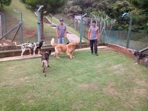 grupo caes hoteis para cachorro sp