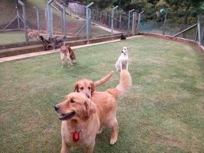 campo para exercitar cães abandonados