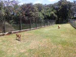 Cachorros no campo grande do hotel veterinário