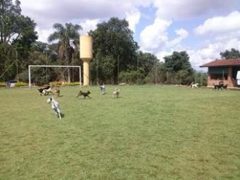 cachorros brincando campo grande hotéis cães