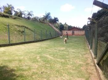 campo grande no spa animal