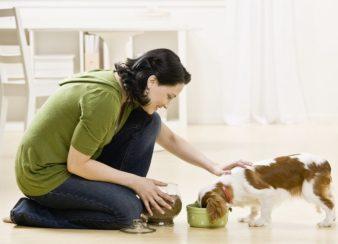 petsiter alimentando cão idoso