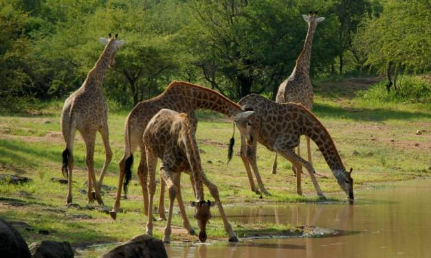 Tanzania Safari and Travel 10 Days