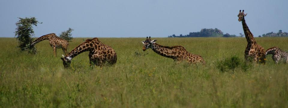 Lake Manyara, Serengeti and Ngorongoro 6 days