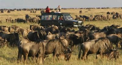 tanzania-wildlife-safaris