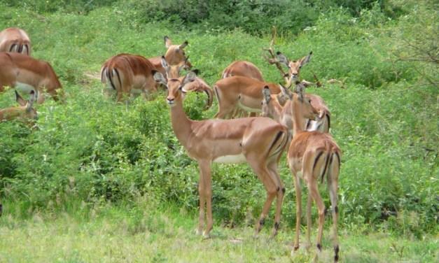 4 Days Maasai Mara and Lake Nakuru Budget Tour