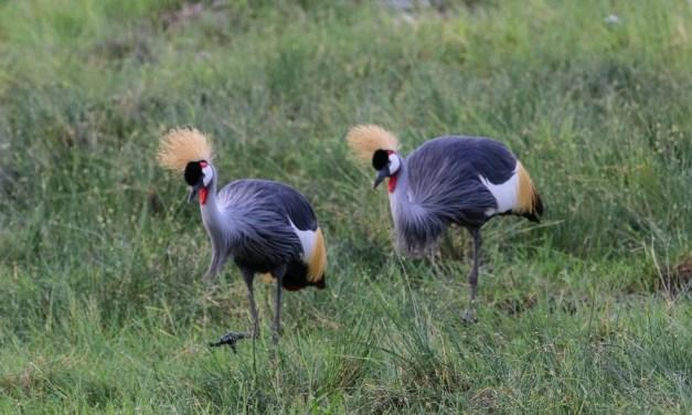 3 Days Amboseli Kenya Camping Safari