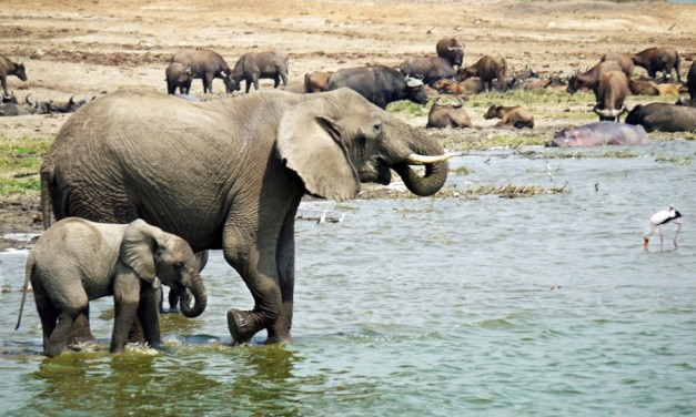 19 Day East African Safari to Kenya ,Uganda and  Tanzania