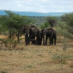 Lake Manyara, Serengeti, Ngorongoro and Tarangire, 7 Day