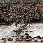 Lake Manyara, Serengeti and Ngorongoro 6 days