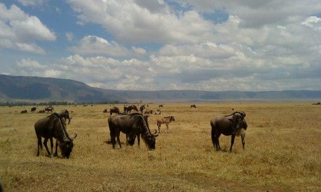 7 Day Safari to Manyara, Serengeti and Ngorongoro