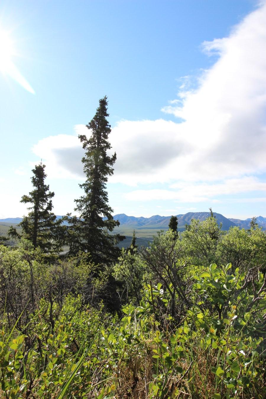Denali - backcountry camping