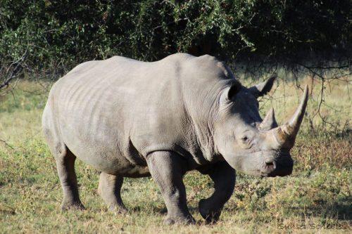 South Africa - Safari
