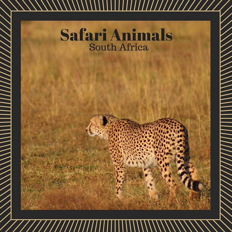 Safari Animals - South Africa