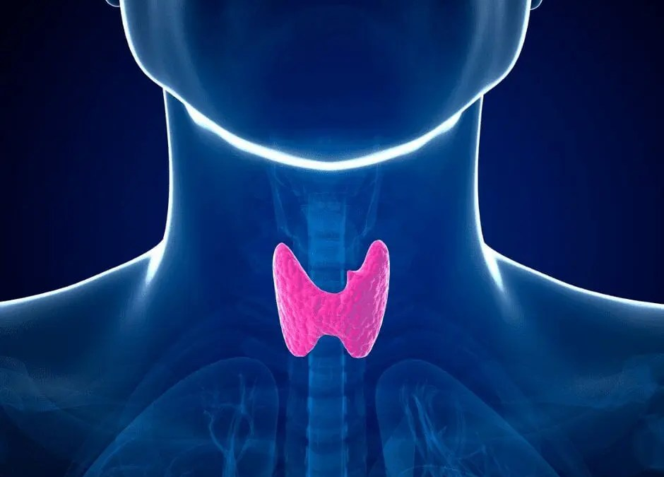 How Thyroid Health Affects the Skin