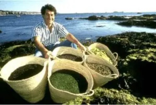 Harvesting Algae for Skincare Products