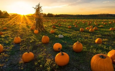 Reward Your Skin with This Amazing Pumpkin Peel System!