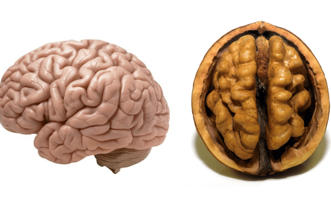 Foods That Feed Your Brain