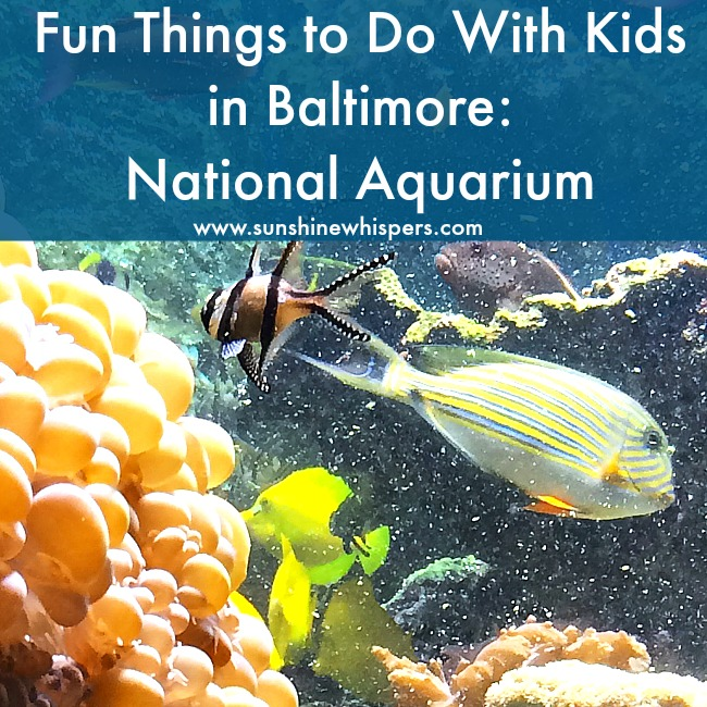 14 Reasons Why Your Kids Would Love the National Aquarium in Baltimore