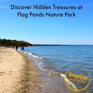 Discover the Hidden Treasure that is Flag Ponds Nature Park