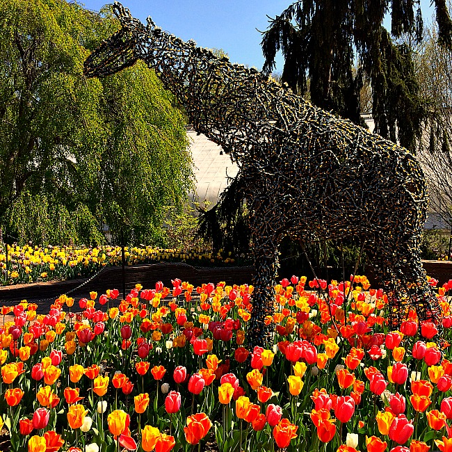 11 totally awesome places to see tulips in maryland dc for Botanical gardens maryland