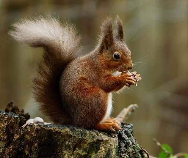 squirrel animal totem symbolism