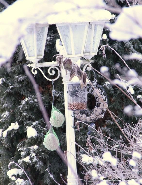 Traditionell matplats för småfåglar