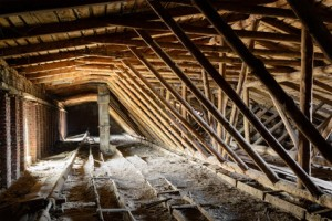 4 Most Common Pests That Invade Your Attic In Winter