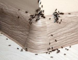 pests in Brevard County Florida