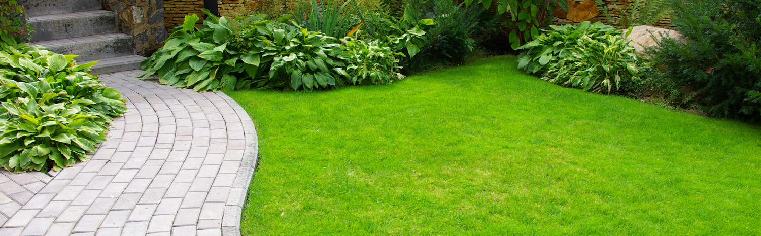 lawn pest care for bugs and insects