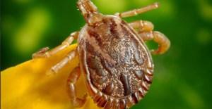 ticks in Central Florida