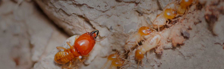 termite treatment and termite control Melbourne Rockledge