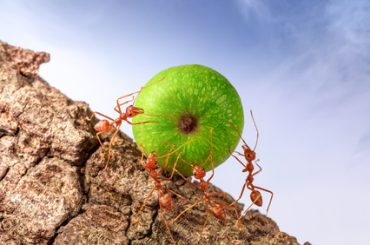 ant problem melbourne fl