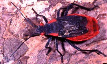 pest bugs Brevard County FL