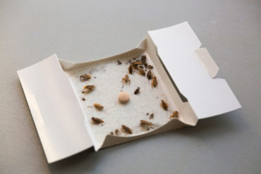 sticky bug traps - are they effective?